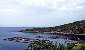 Креветочная ферма в окрестностях курорта Paralia Tyrou.