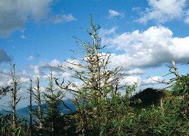 Вершина горы Mount LeConte. Great Smoky Mountains. Май, 2001 год.