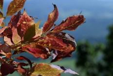 Осень пришла в Вермонт. Mt. Philo State Park.
