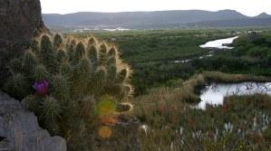 Земляничный кактус на краю утеса в каньоне Boquillas.
