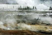 Деревья-привидения в дыму от гейзеров. Norris geyser basin.