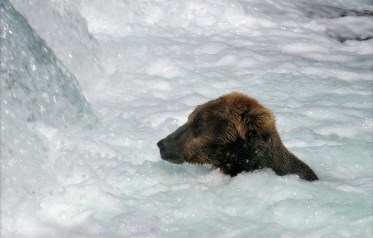 Медведица принимает ванну.