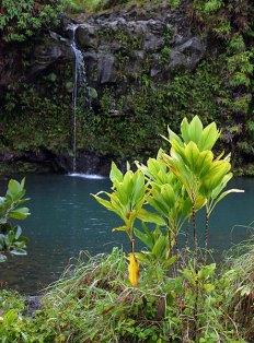 Маленький водопад в парке Pua'a Ka'a.
