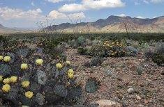 Пустыня в цвету.