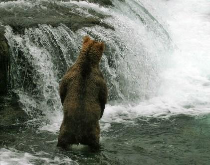 С другой стороны водопада тоже рыбы нет.