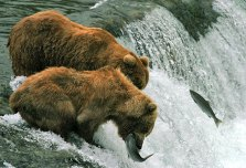 Активная рыбалка.