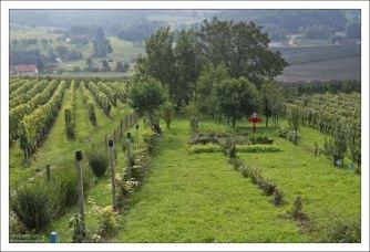 Огород и виноградник перед домом.
