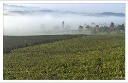Деревня Zelezna Gora в тумане.