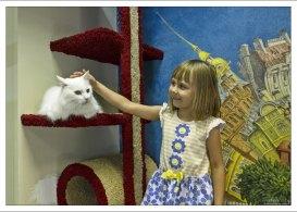 Саша и белоснежный кот Валлен в «Республике Кошек».