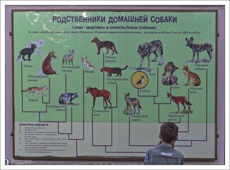 Родственники собаки.