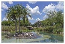 Остров фламинго. В парке Animal Kingdom живет 6 видов фламинго.
