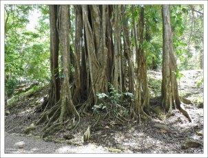 В джунглях Lamanai.