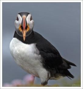 По клюву можно определять точный возраст птиц.