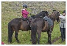 Исландских лошадей не следует путать с пони, несмотря на их сходство.