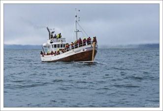 Раньше подобного типа суда использовались для охоты на китов, теперь - в качестве круизных лодок.