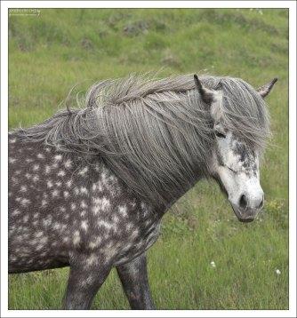 Лошадь масти 80-го уровня :)