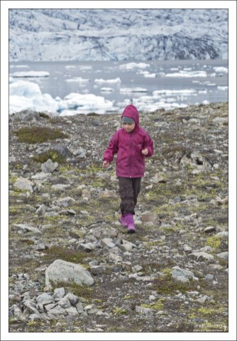 Саша занята своим любимым делом в Исландии - собиранием ягод.