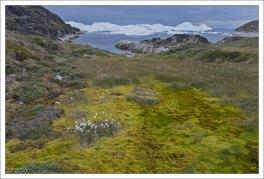 Арктическая тундра Гренландии.