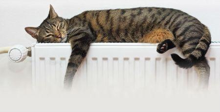 pisica-pe-calorifer