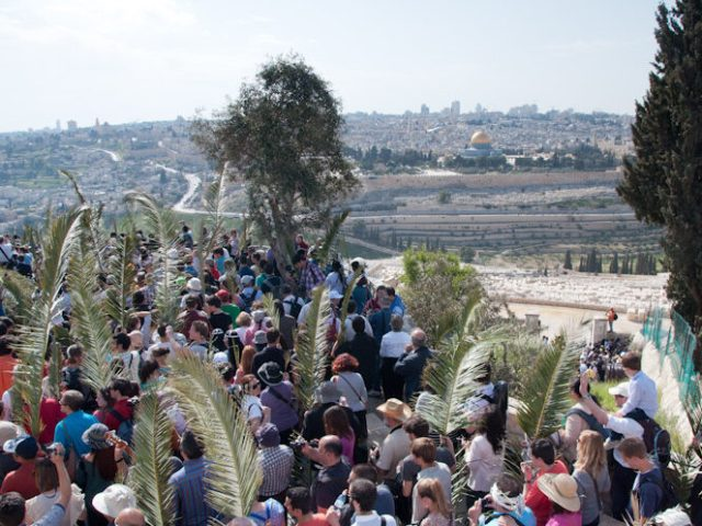 Moltitudine di palme a Gerusalemme