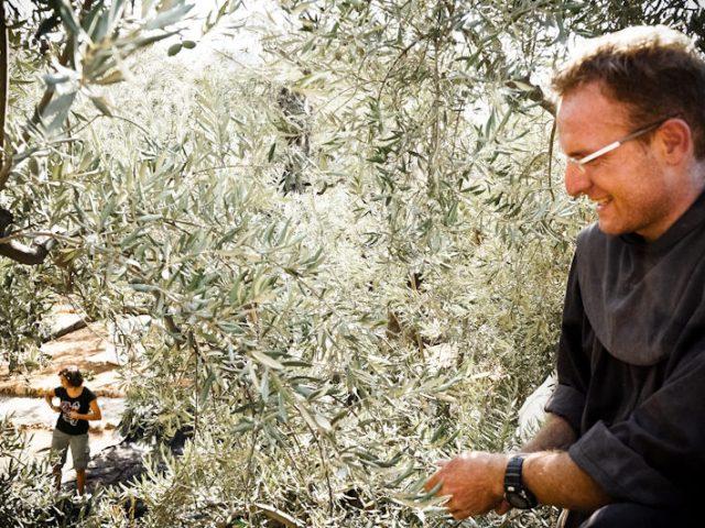 Raccolta delle olive dell'orto del Getsemani