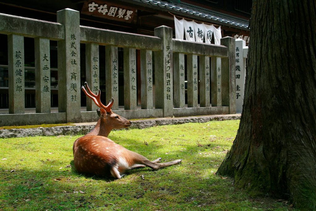 deer taking rest