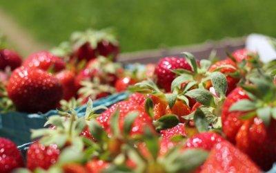 Récoltes de fruits, disponibilités des emballages et fabrication de confiture : Bruno Cassan – PDG d'Andrésy Confitures, témoigne des arbitrages que vont devoir faire les marques !