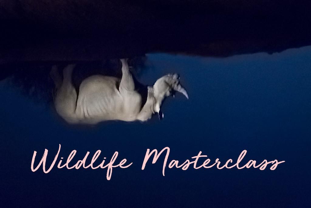 Wildlife Photography Masterclass