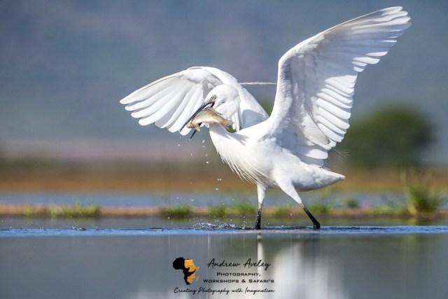 ZZimanga photographic Safari