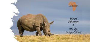 Expert Lightroom & Wildlife Image Editing - Rhino Image