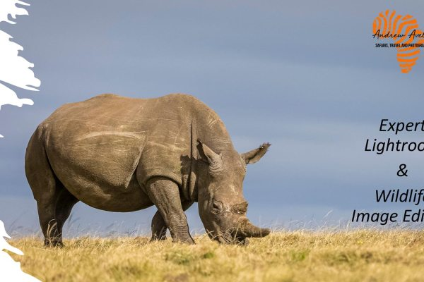 Expert Lightroom & Wildlife Image Editing - Rhino Image