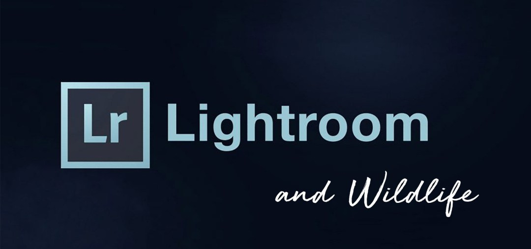 Expert Lightroom & Wildlife Image Editing