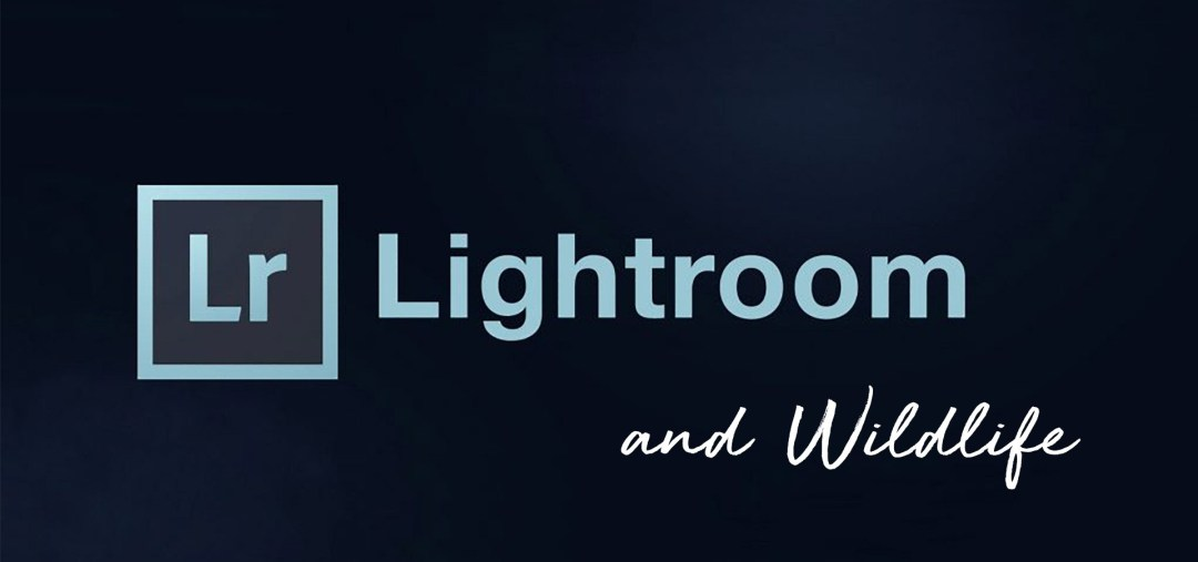 Expert Lightroom & Wildlife Image Editing