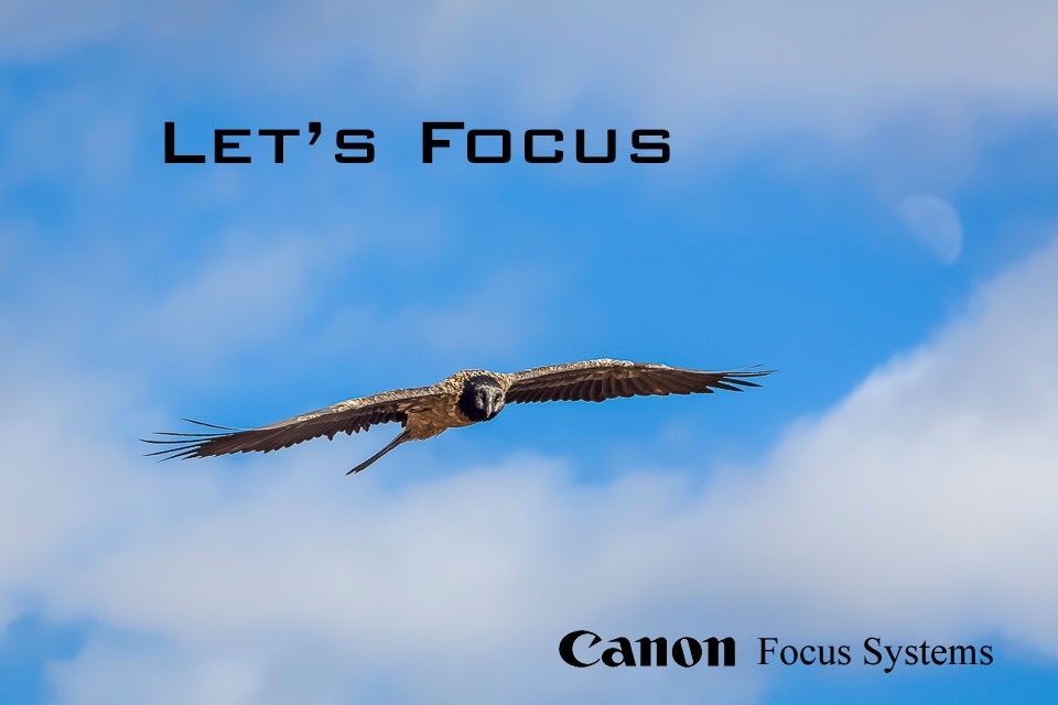 Canon Focus System Training