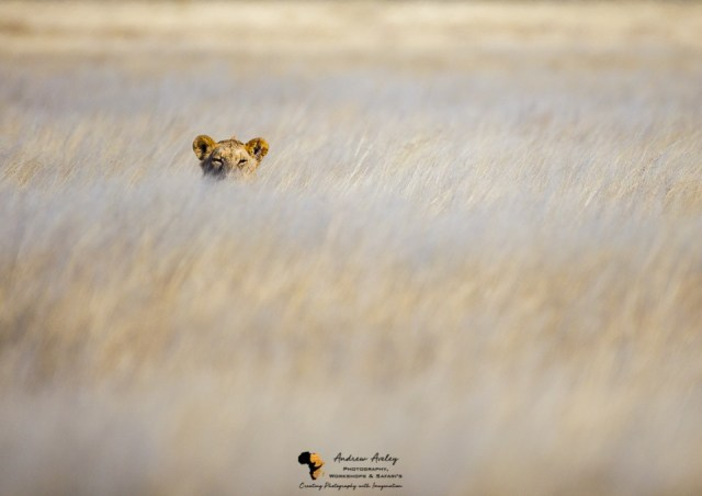 Namibia Wildlife Photography Tour & Photographic Safari