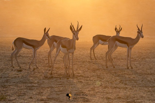 Kalahari Photography Workshop - 5 Days