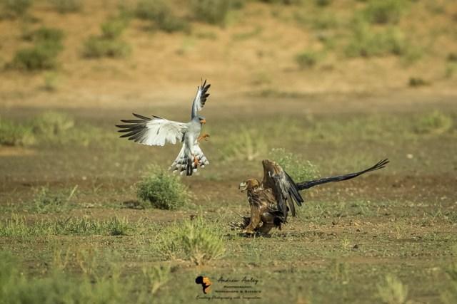 Kalahari Photography Safari