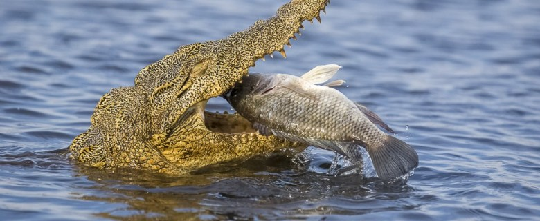 Chobe & Khwai Wildlife Photography