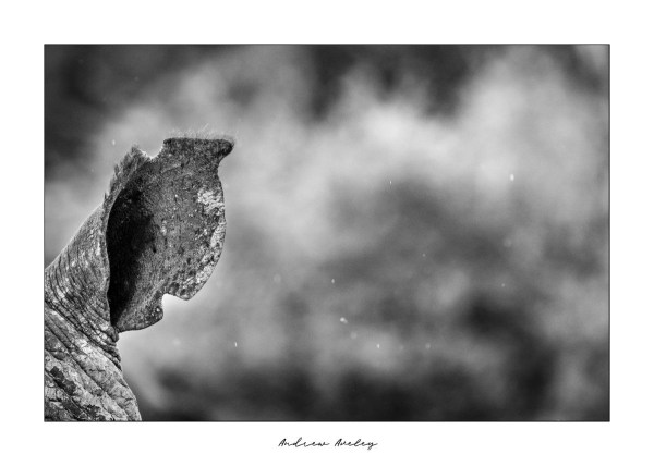 Please Listen - Rhino FIne Art Print by Andrew Aveley - purchase online
