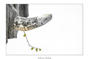 The Strand- Elephant Fine Art Print by Andrew Aveley - purchase online