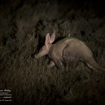 Karoo Experience - Photos from the Karoo Gariep Nature reserve by Andrew Aveley