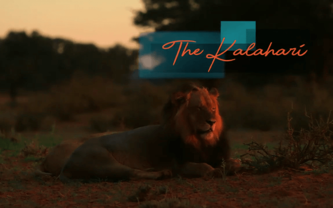 The Kgalagadi – The Ultimate Experience