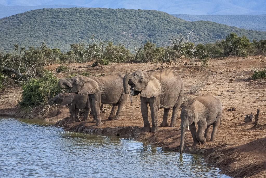 Addo Private Safari