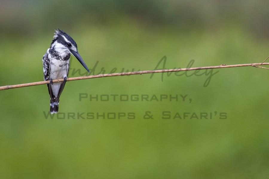 Kalizo General Birdlife