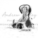 Chobe Wildlife