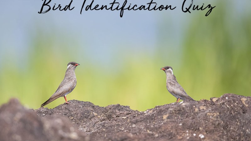 Bird Identification Quiz