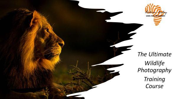 Online Wildlife Photography Training