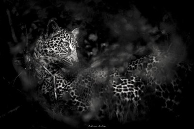 Low Key Wildlife Portfolio of Images by Andrew Aveley