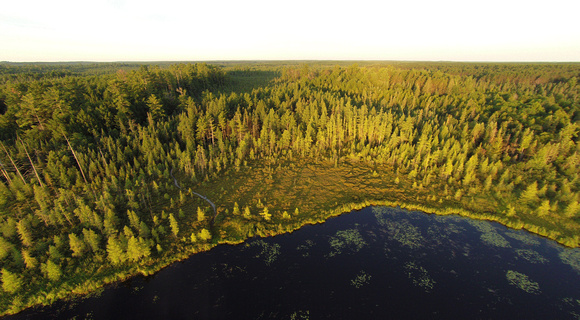 wetland trees