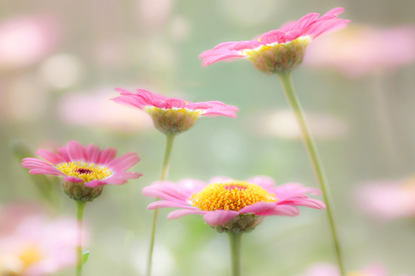 Flower photograph by Mandy Disher